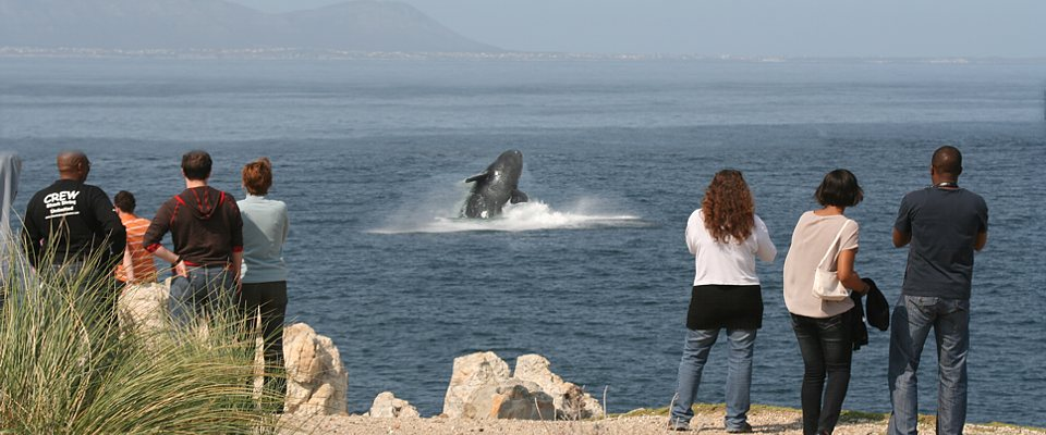 hermanus-wale-africa-adventure.jpg