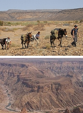 Maultier Trekking im Fish River Canyon, Namibia