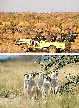 Moremi Nationalpark in Botswana