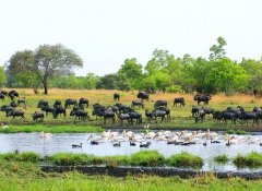 Tierbeobachtung in Sambia mit Adventure Purists