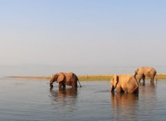 Africa Adventure Travel - Elefanten im Karibasee
