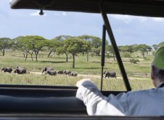 Mauly Tours & Safaris in Moshi, Kilimanjaro Region
