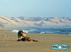 Salty Jackal Surfing & Safari in der Namib Region
