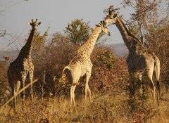 Savannah Southern Safaris Tierbeobachtung in Livingstone