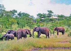 The Elephant Camp, Unterkunft in Victoria Falls