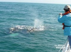 Walbeobachtung bei The Whale Watchers in Overberg