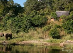 Elephanten, Tongole Wilderness Lodge, Nkhotakota