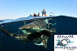Aliwal Dive Centre in Umkomaas