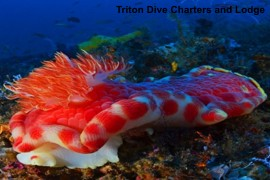 Triton Dive Charters and Lodge in Sodwana Bay